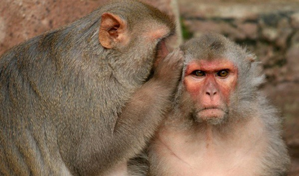 10 Popular Species of Monkeys to Increase your General Knowledge 7