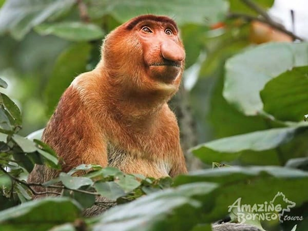 10 Popular Species of Monkeys to Increase your General Knowledge 8