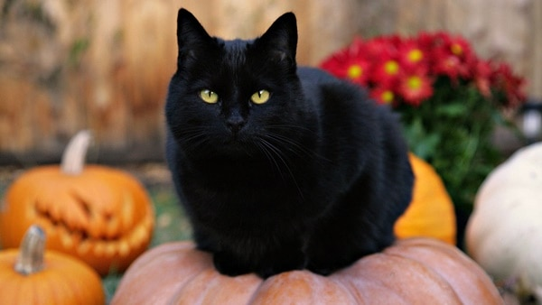 10 Popular Superstitions about Black Cats 2