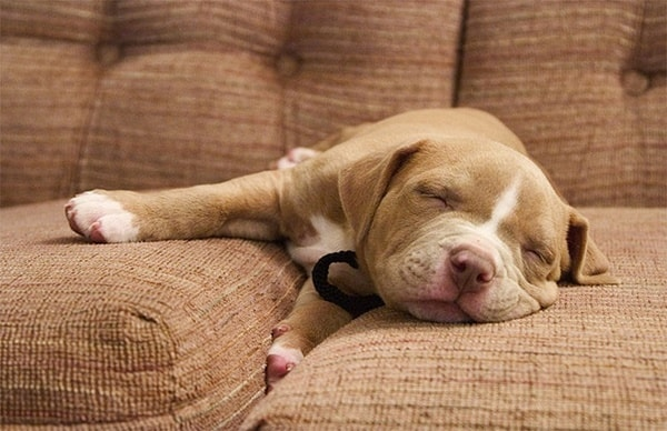 40 Cute Pet's Nap Time Pictures 15
