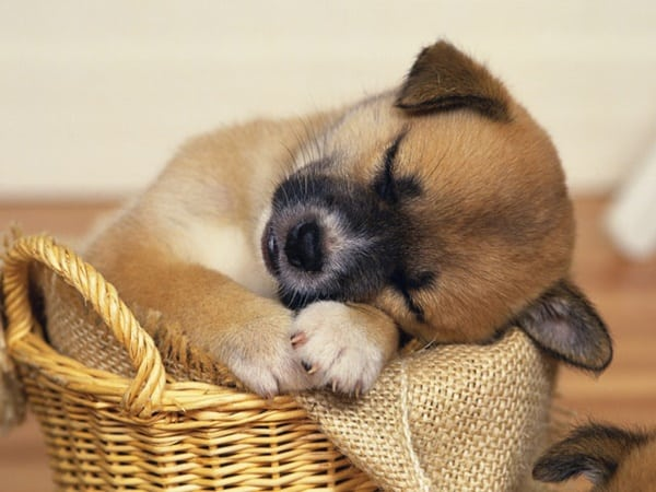 40 Cute Pet's Nap Time Pictures 17