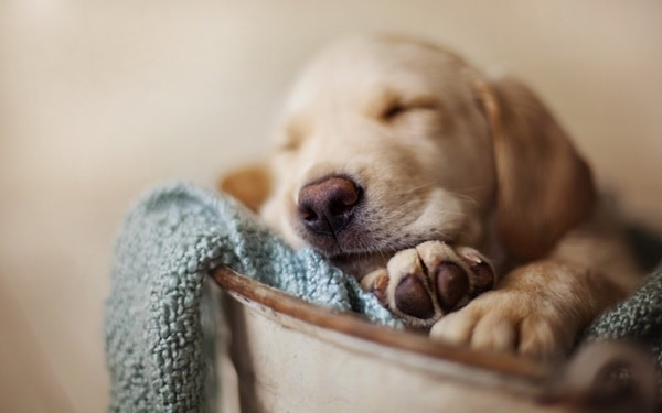 40 Cute Pet's Nap Time Pictures 22