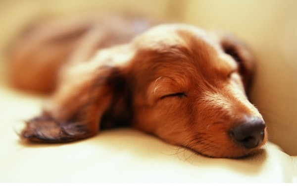 40 Cute Pet's Nap Time Pictures 28