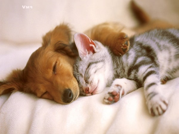 40 Cute Pet's Nap Time Pictures 29