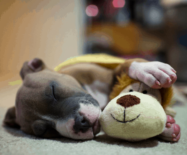 40 Cute Pet's Nap Time Pictures 33