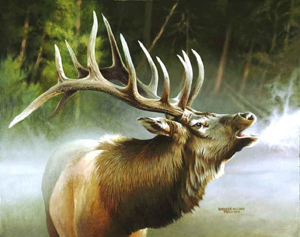 40 Outstanding Oil Painting on Animals 12