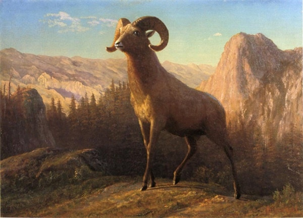 40 Outstanding Oil Paintings Of Animals Tail And Fur