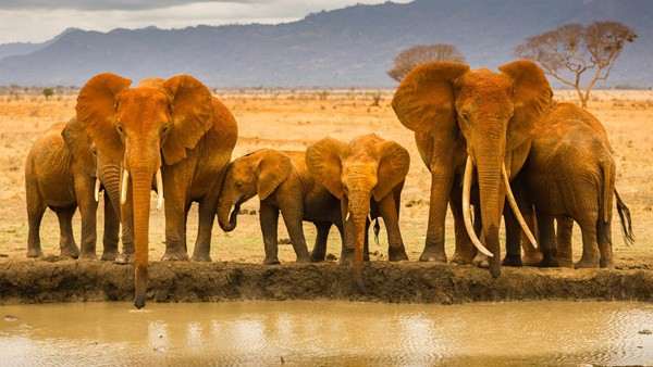 40 Outstanding Pictures of African Elephants 11
