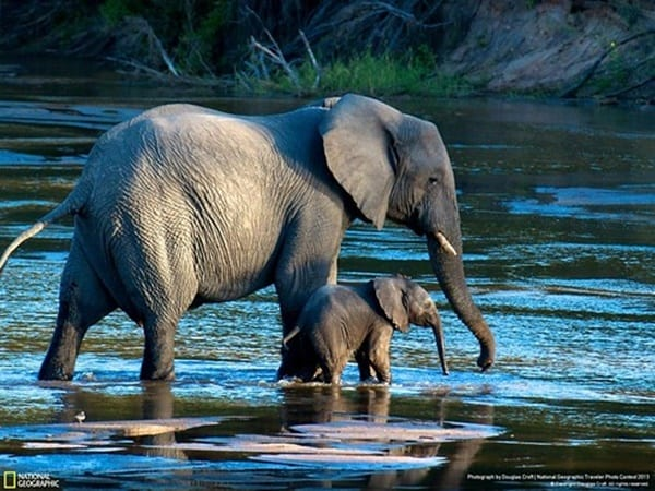 40 Outstanding Pictures of African Elephants 23