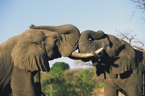 40 Outstanding Pictures of African Elephants 29