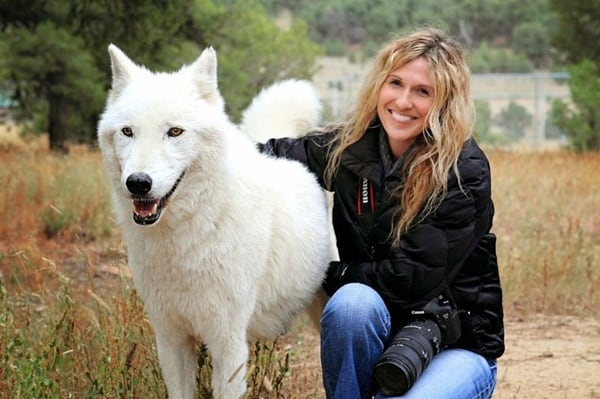 Hybrid Wolf Dog Breed Information with Pictures 14