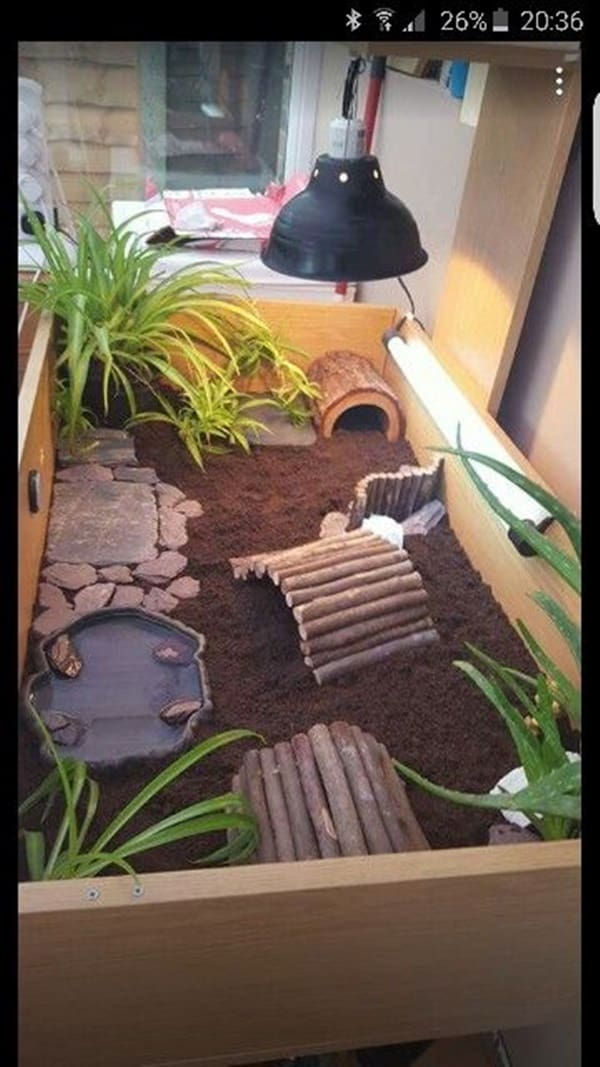 10 Beautiful Ideas of Tortoise Crate 5