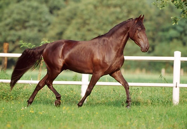 10 Best Horse Breeds List 2
