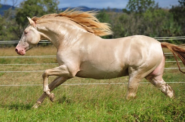 10 Best Horse Breeds List 3