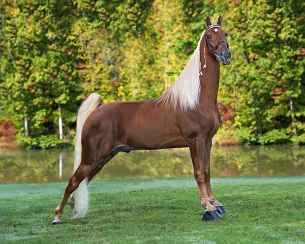 10 Best Horse Breeds List 4
