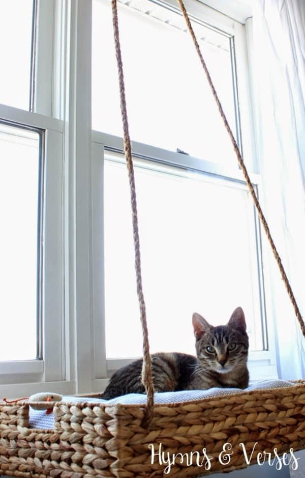 10 Cool Hanging Cat Perch Ideas 1