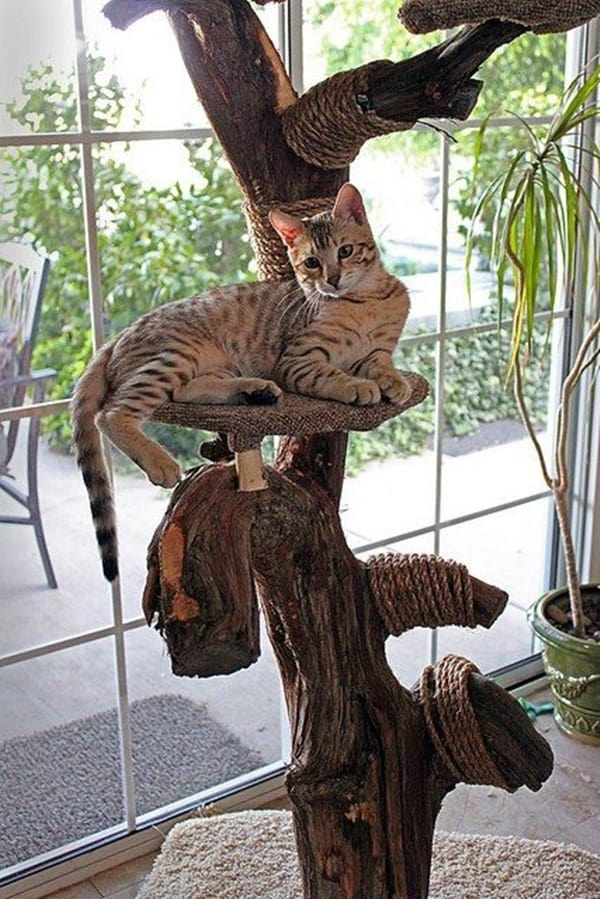 10 Cool Hanging Cat Perch Ideas 9