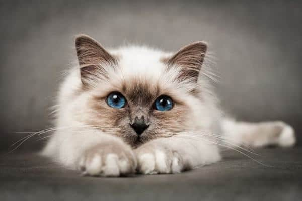 effektiv billig ormekur til kat