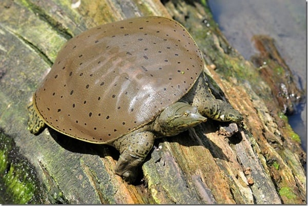 10 Weird and Wonderful Turtle and Tortoise Species 3