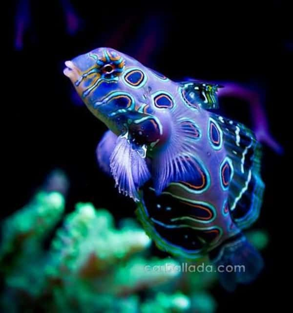 30 Pictures of Sea Animal with their Amazing Color Effect 18