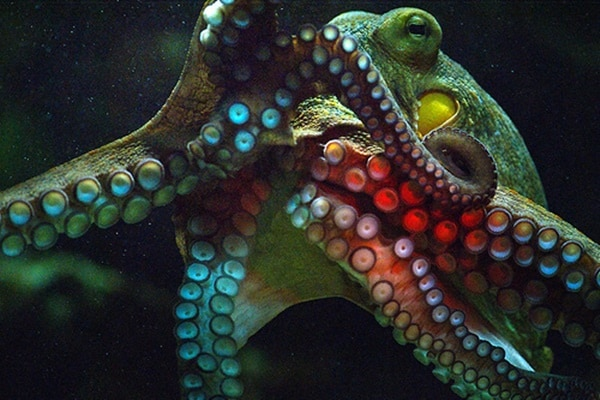 30 Pictures of Sea Animal with their Amazing Color Effect 30