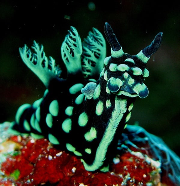 30 Pictures of Sea Animal with their Amazing Color Effect 7