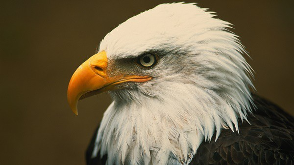 40 Immoral and Powerful Pictures of Eagle 2