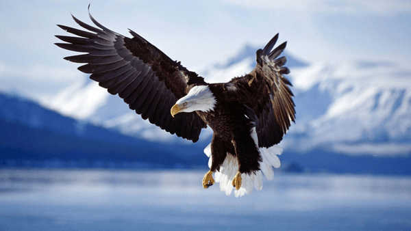 40 Immoral and Powerful Pictures of Eagle 29