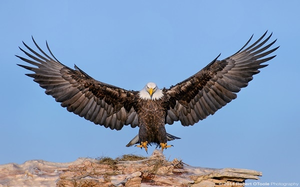 40 Immoral and Powerful Pictures of Eagle 7