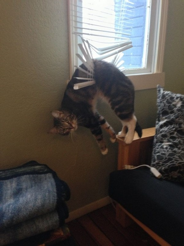 40 Pictures of Cats doing Funny Things 13