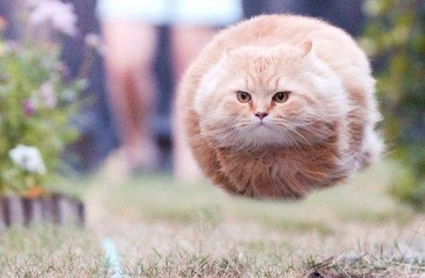40 Pictures of Cats doing Funny Things 15