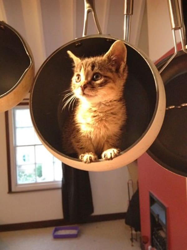 40 Pictures of Cats doing Funny Things 17