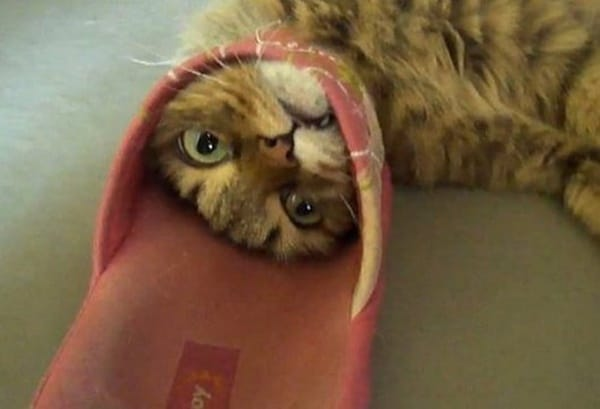 40 Pictures of Cats doing Funny Things 21