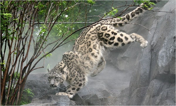 40 Pictures of Leopard in their Wild Nature 18