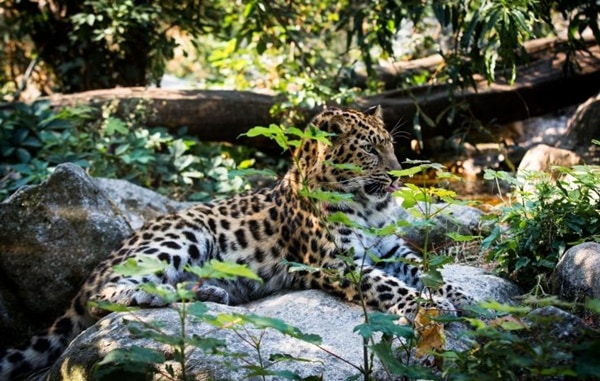 40 Pictures of Leopard in their Wild Nature 23