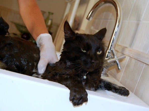 40 cute Pictures of Dog Bath Time 22