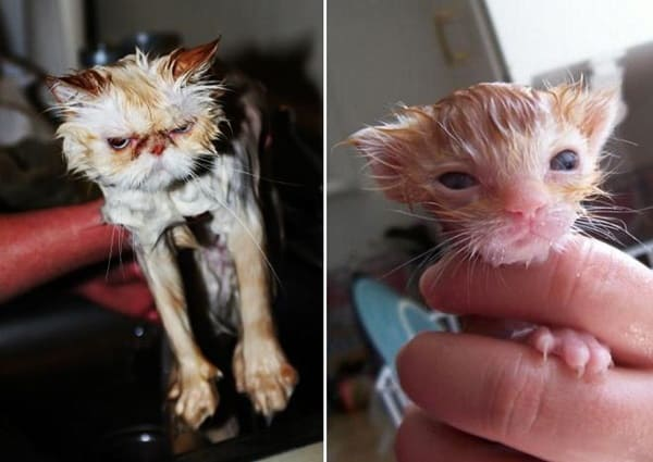 40 cute Pictures of Dog Bath Time 23