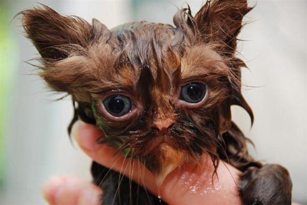 40 cute Pictures of Dog Bath Time 24
