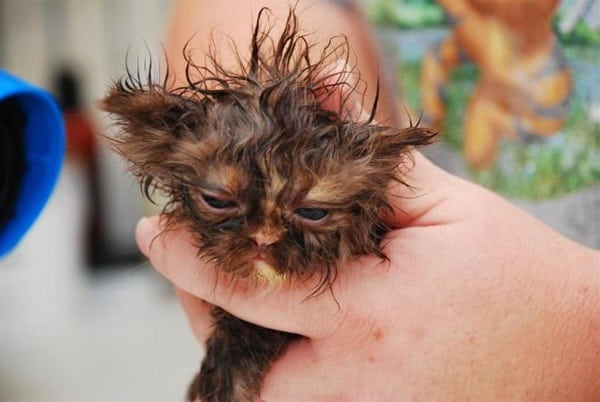 40 cute Pictures of Dog Bath Time 25