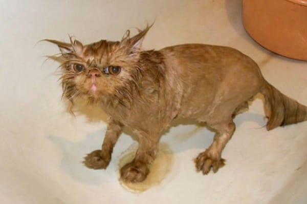 40 cute Pictures of Dog Bath Time 30