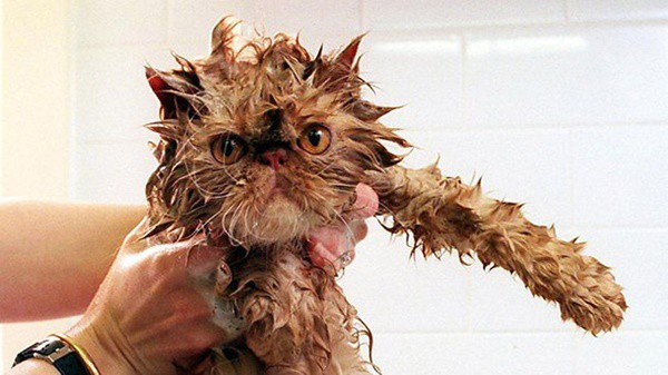 40 cute Pictures of Dog Bath Time 32
