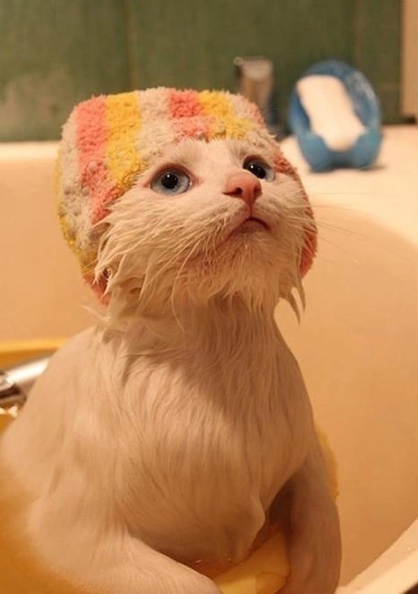 40 cute Pictures of Dog Bath Time 35