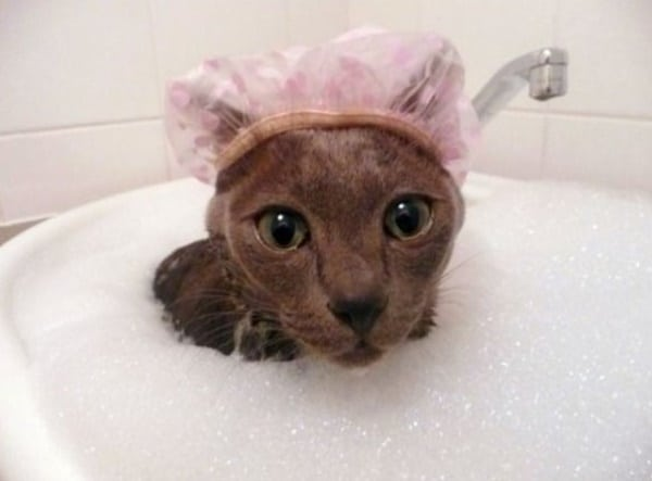 40 cute Pictures of Dog Bath Time 37