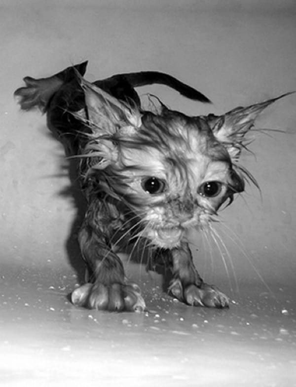 40 cute Pictures of Dog Bath Time 39
