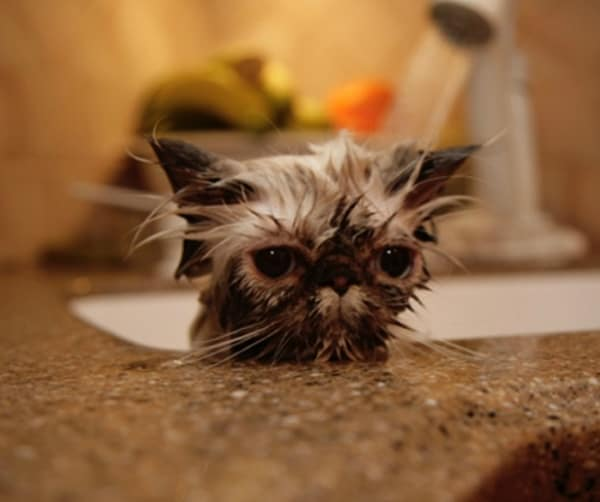 40 cute Pictures of Dog Bath Time 40