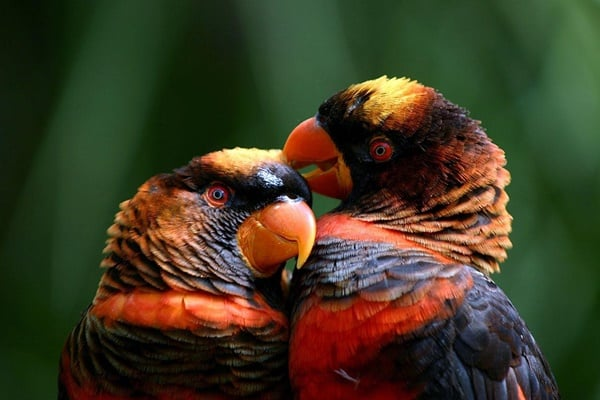 10-most-beautiful-parrot-species-in-the-world-2