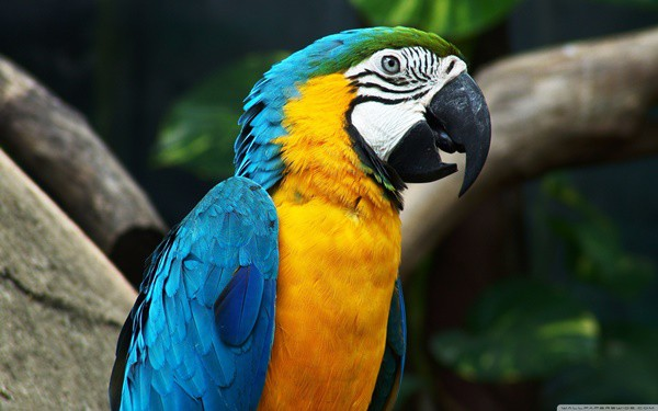 10-most-beautiful-parrot-species-in-the-world-3