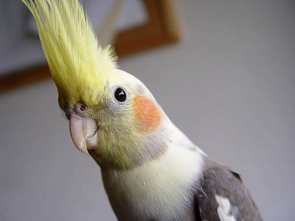 10-most-beautiful-parrot-species-in-the-world-4