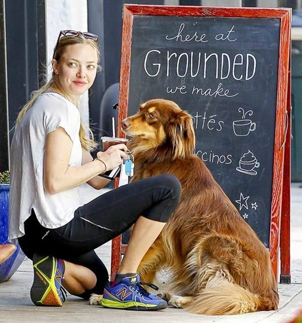 15 Celebrities with Rescue Dogs 13