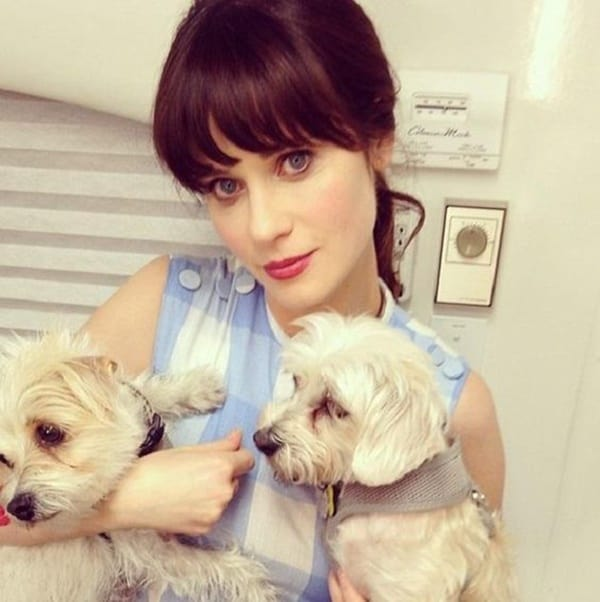 15 Celebrities with Rescue Dogs 3